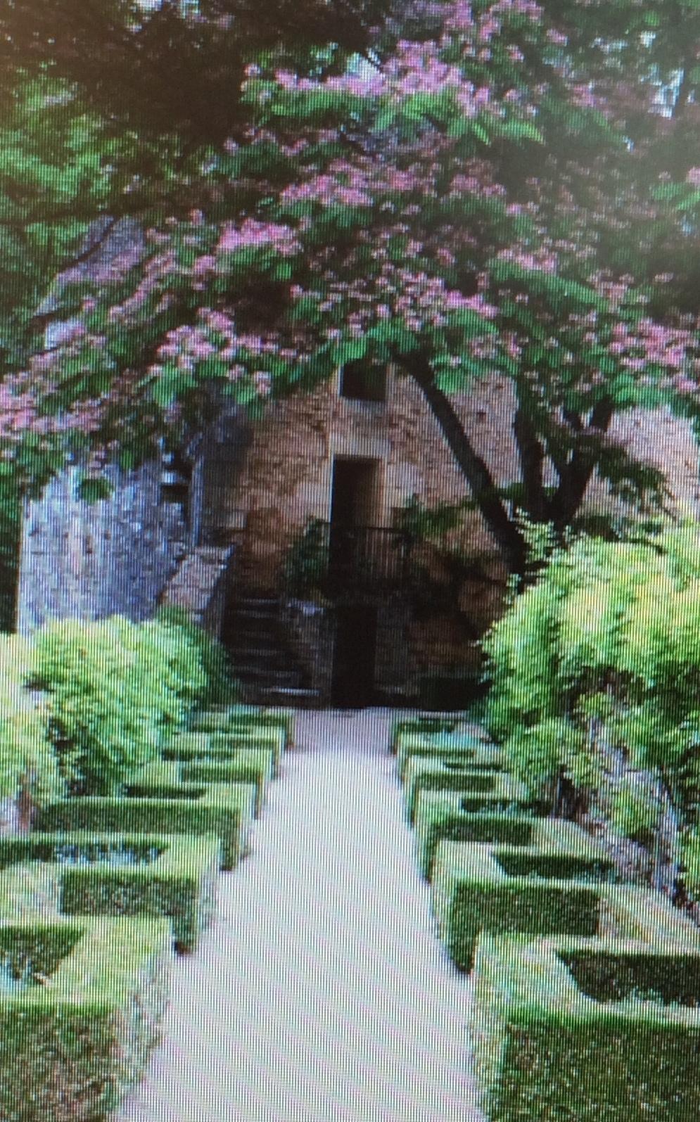 кусты французского сада
