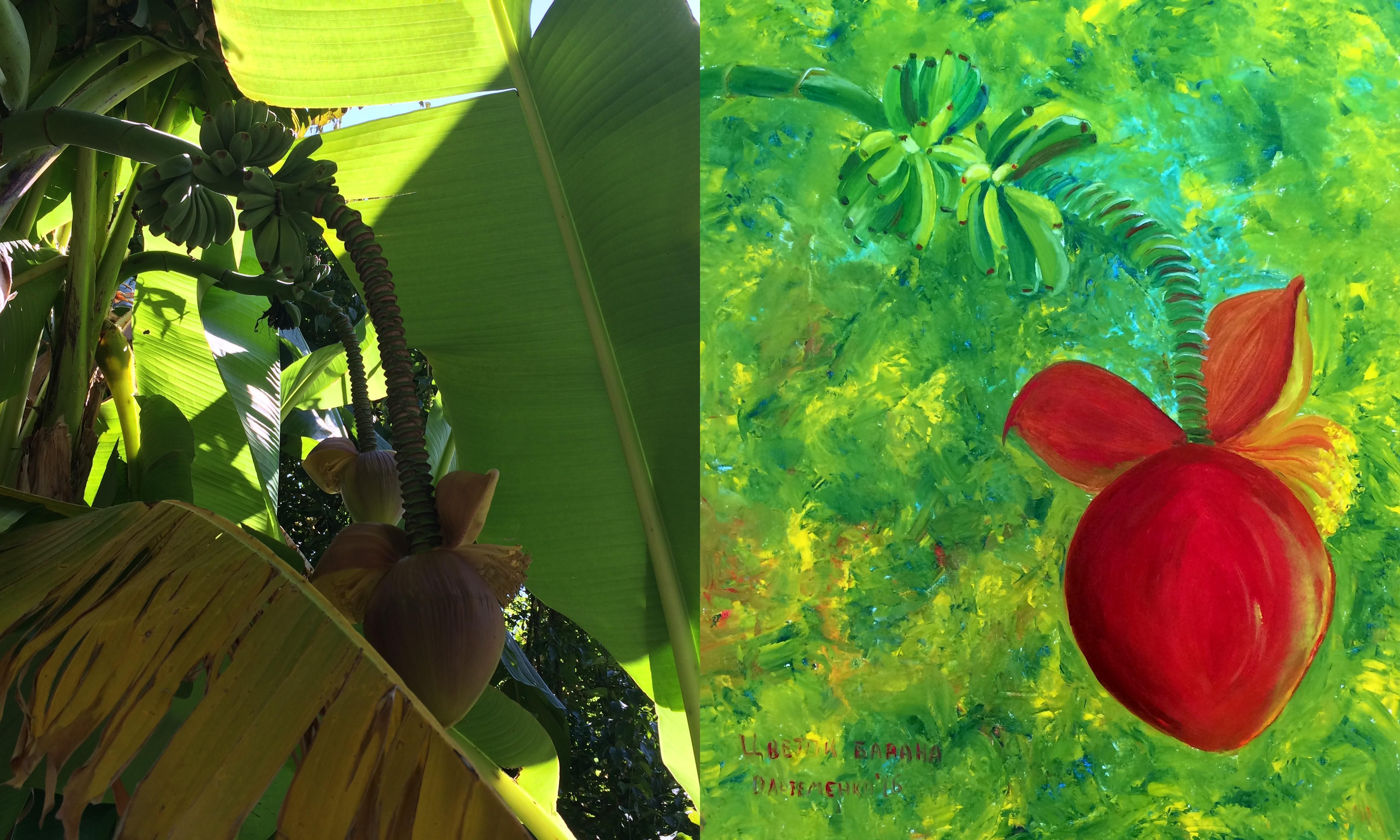 банан цветет